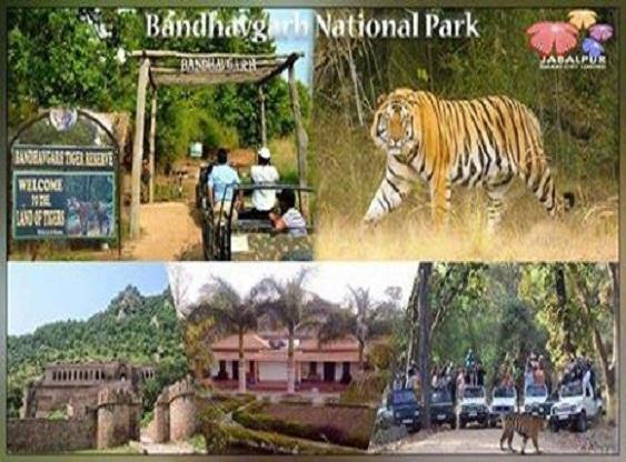 Tourist Places Near - बांधवगढ़ नेशनल पार्क