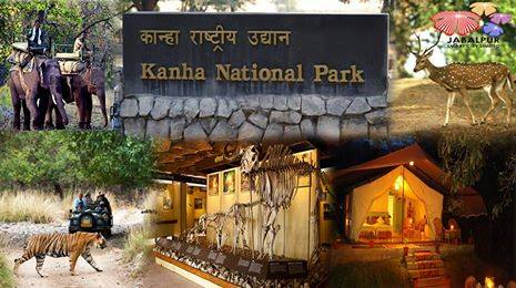 Places Near To Jabalpur - Kanha National Park